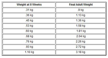 units of weight chart